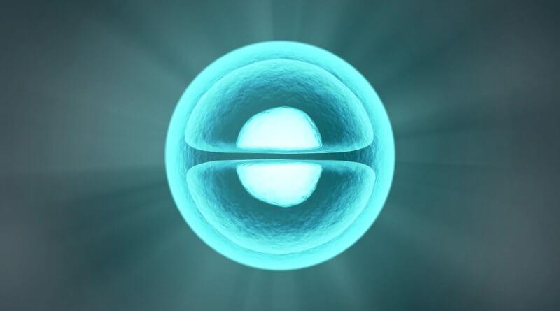 Transferencia de células somáticas en clonación de animales