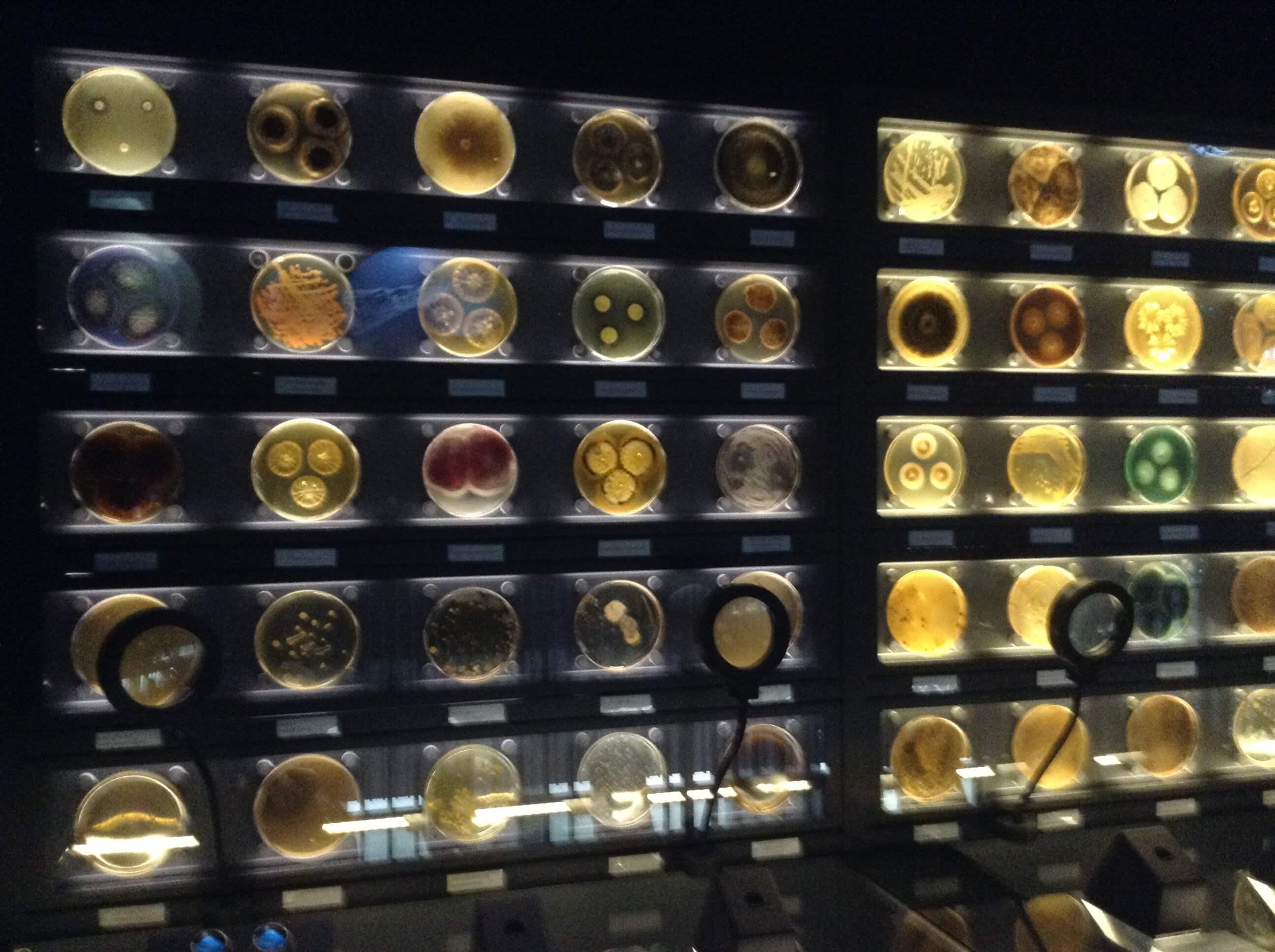 Visité Micropia, el único museo de Microbiología del mundo