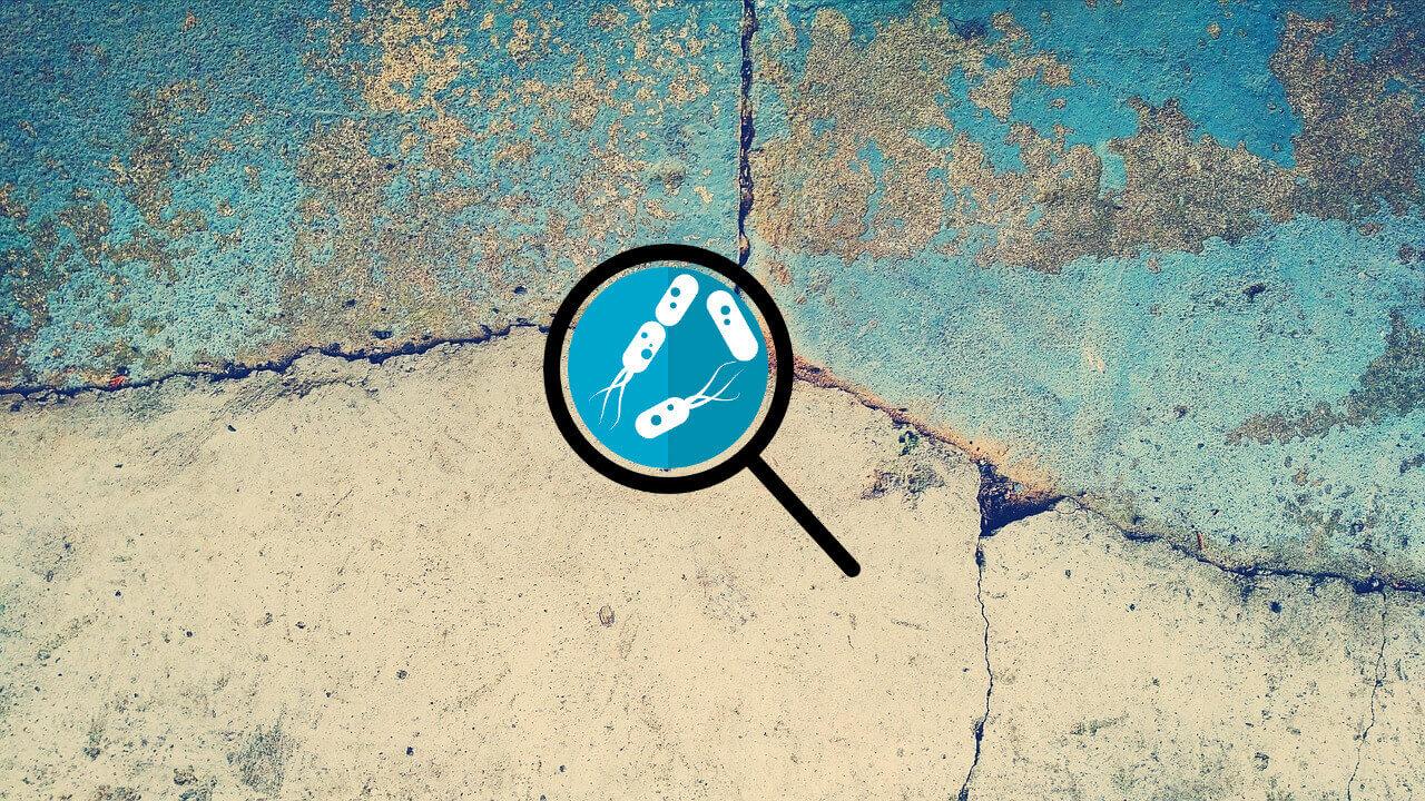 ¿Bacterias que arreglan fisuras en el concreto? Lo nuevo en Bioingeniería